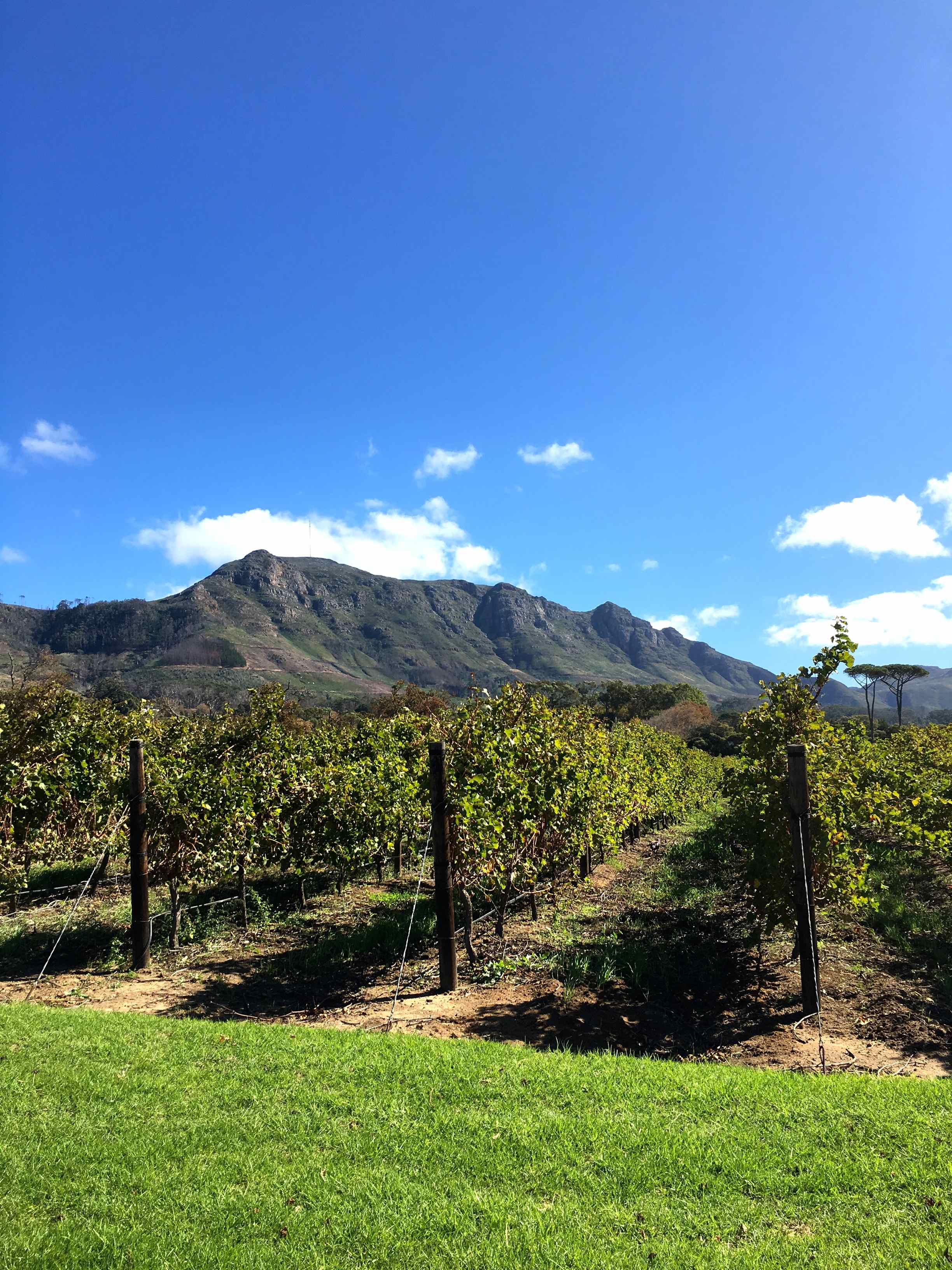 Capetown-Winelands